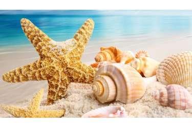 Offerta Luglio e Agosto Ischia 7 Notti dal 29.07 al 05.08